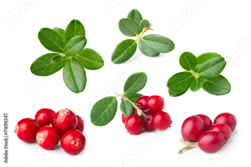 Poster  Cowberry isolated