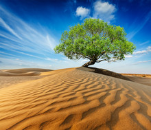 Lonely Green Tree In Desert Du...