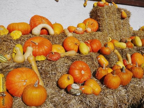 Aluminium Prints Buffet, Bar pumpkin straw