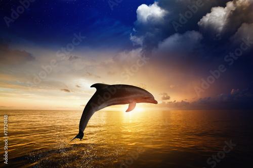 Carta da parati Dolphin jumping