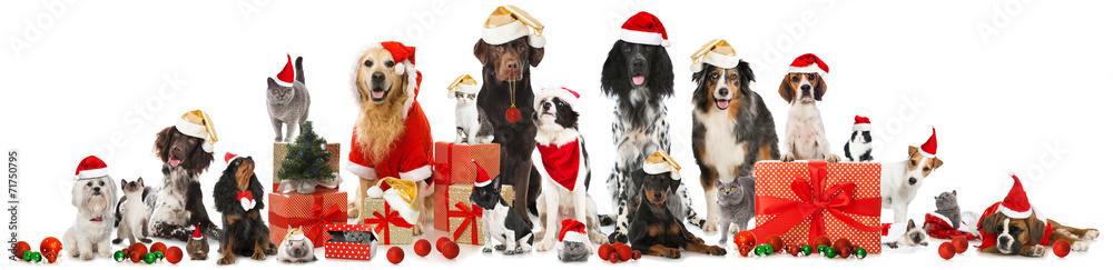 Fototapeta Weihnachtstiere