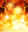 Autumn tree maple leaves background