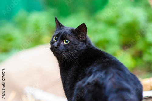 Fotografija black cat
