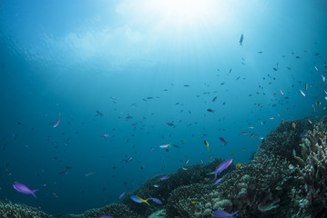 Fototapeta na wymiar 海底の景色