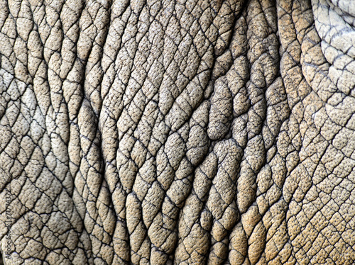 Poster Rhino rhino skin texture