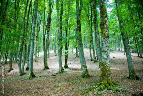Photo Stands Road in forest Beech forest