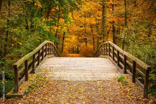 In de dag Bruggen Bridge in autumn forest