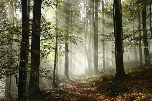 Foto auf Acrylglas Bestsellers Forest path surrounded by fog in the sunshine