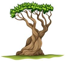 A Bristlecone Pine Tree