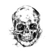Drawing human skull on white