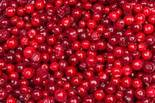 Cranberries Background