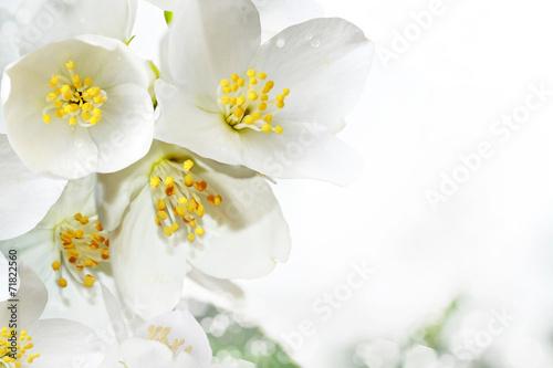 Fotografie, Obraz  flowers jasmine