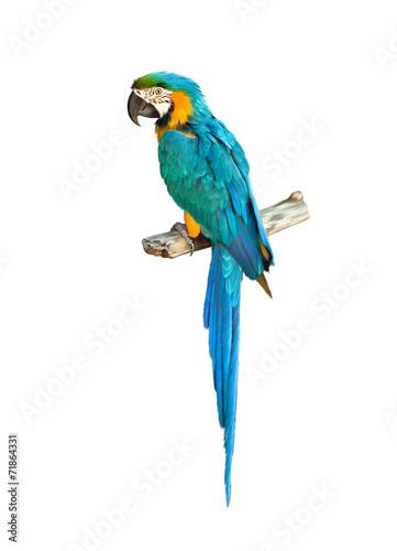 Colorful blue parrot macaw Canvas Print