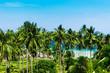 Exotic Paradise Idyllic Day