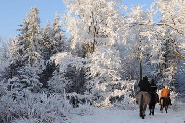 konie, zima, las