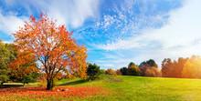 Autumn, Fall Landscape. Tree W...