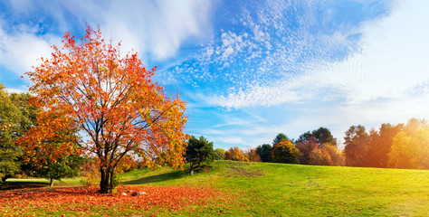 Autumn, fall landscape. Tree with colorful leaves. Panorama