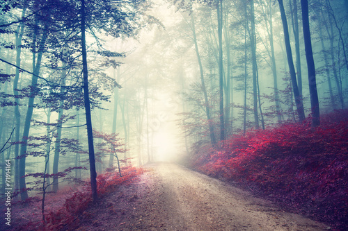 Photo sur Toile Bestsellers Vintage magic forest road