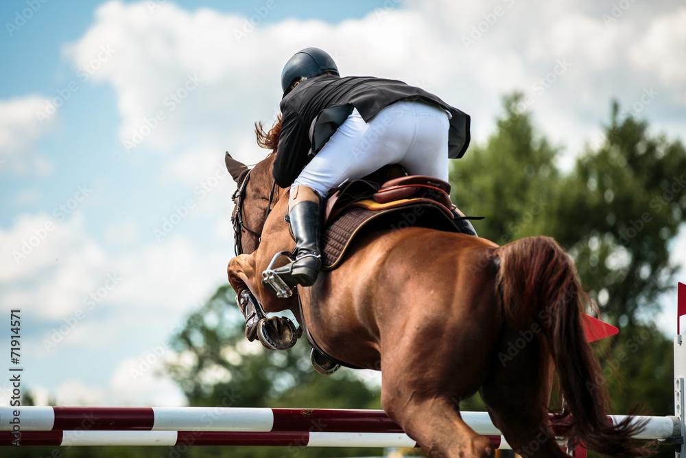 Fototapety, obrazy: Equestrian