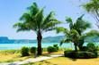 Palm View Beautiful Beach