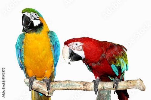 Staande foto Papegaai two parrots