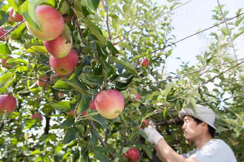Foto  リンゴ農家