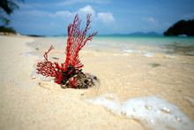 Beach And The Coralline