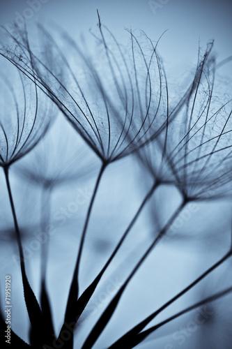 Staande foto Paardebloemen en water Wet dandelion on white, shiny surface with small droplets