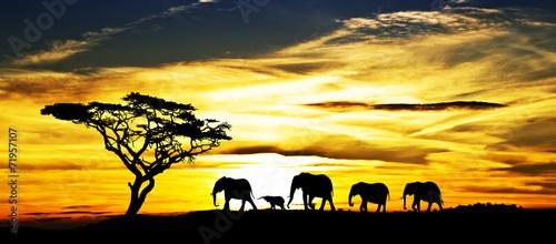 desfile de elefantes por la ladera de la montaña