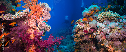 Papiers peints Recifs coralliens Colorful underwater reef with coral and sponges