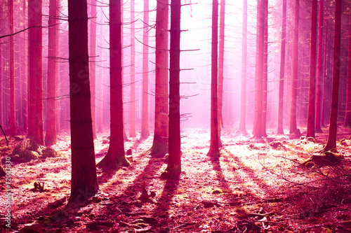 Foto op Plexiglas Crimson fantasy forest scenery with a starnge atmosphere