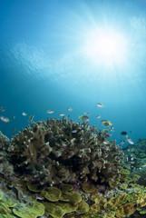 Fototapeta na wymiar サンゴと小魚と太陽
