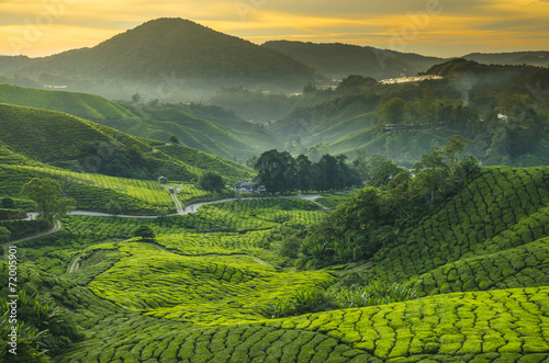 Tea plantation Cameron highlands, Malaysia Canvas Print