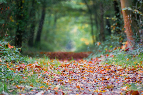 Photo Stands Road in forest Chemin de bois