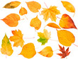 Autumn leaves isolated on white