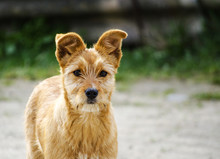 Redhead Doggie
