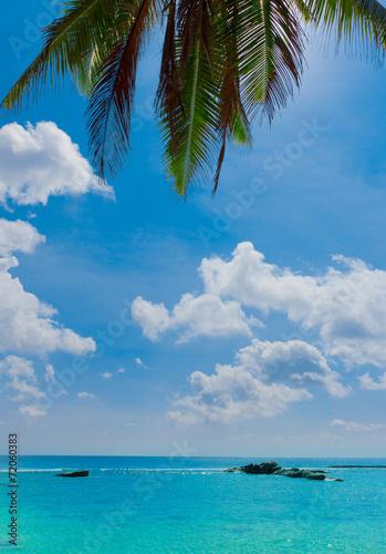 Foto op Canvas Strand Closeup Jungle Overhanging