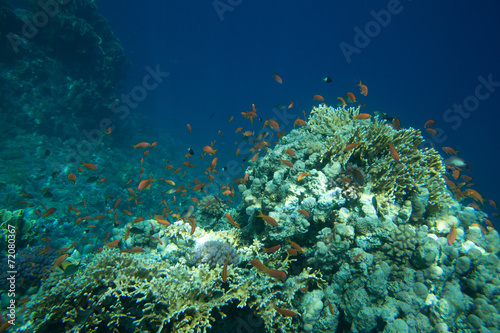 Staande foto Koraalriffen Coral Sea