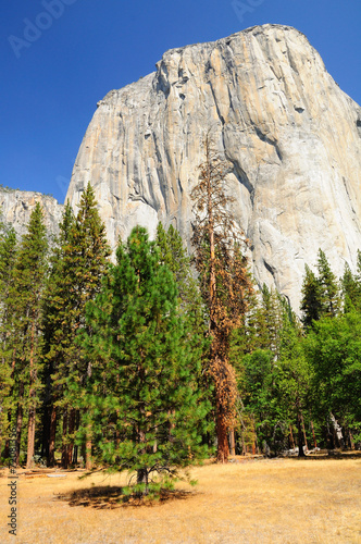 Deurstickers Natuur Park Yosemite national park. California. USA.