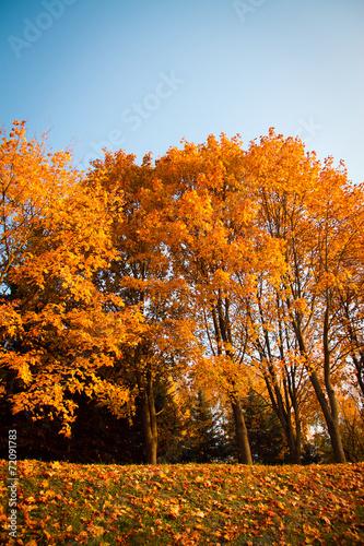 Foto op Canvas Herfst autumn in the park.