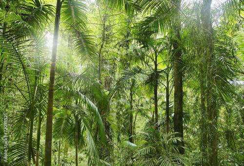 tropikalnych