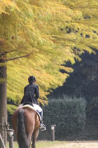 Fotobehang Paardrijden 乗馬