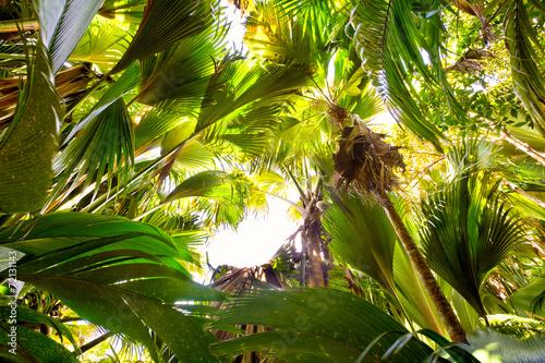 tropikalny-las-deszczowy-w-valle-de-mai-praslin-seszele