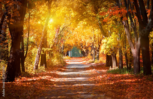 alley-in-the-autumn-park