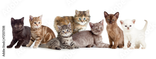 Fotografia different kitten or cats group