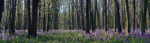 Fotobehang Khaki Spring flowers in the forest