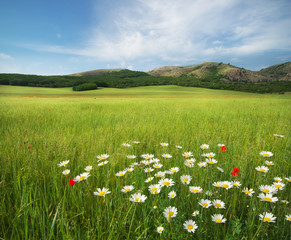 Obraz na SzkleBeautiful meadow landscape
