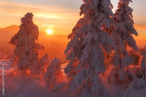 Foto op Aluminium Vulkaan Trees