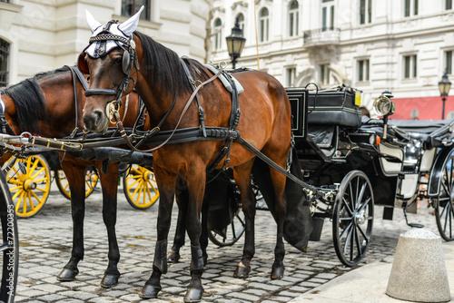 Fotografía  Horse drawn carriage