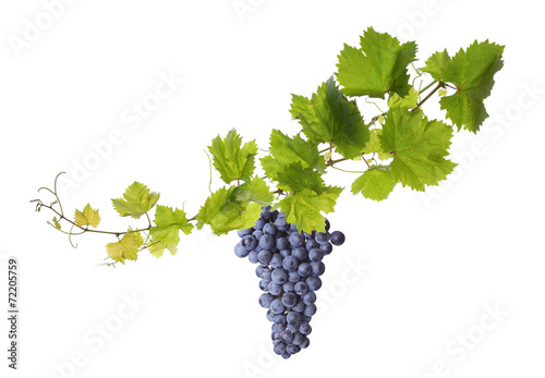 Fotografía  Vine leaves isolated on white